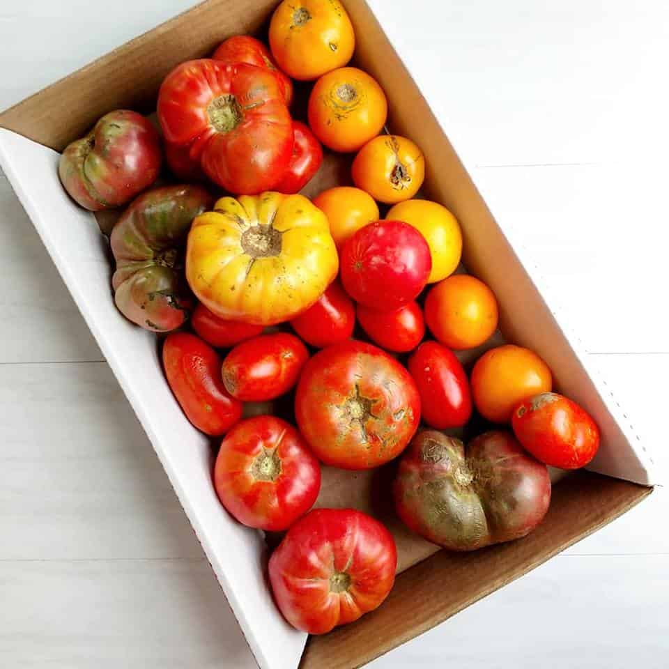 Large box filled with heirloom tomatoes