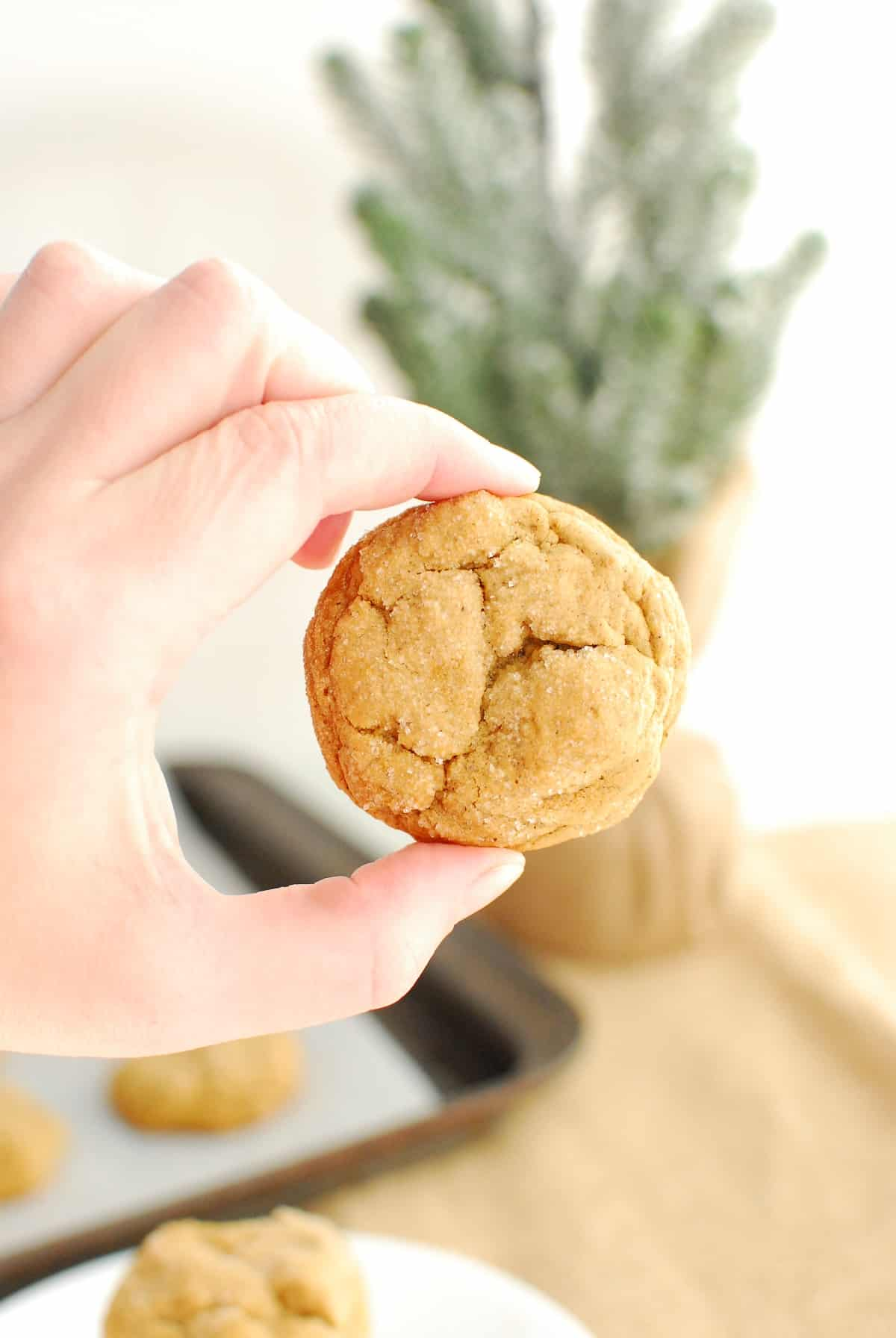 a woman's hand holding one dairy free molasses cookie